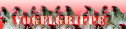 Vogelgrippe – Die Angst geht um