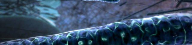 Ein Blick in die Mitochondria, das Kraftwerk einer Zelle. Es muss einen genialen Schöpfer geben.