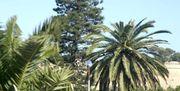 Palmen in Algerien.