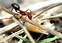 Einer Ameise zusehen kann heilsam