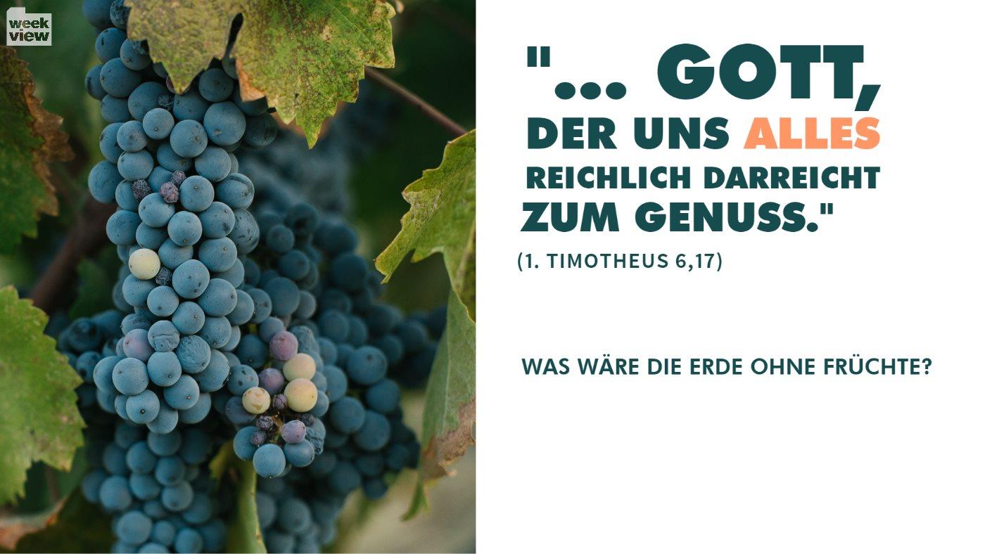 Was wäre die Erde ohne Früchte?